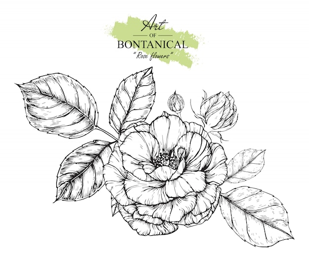 Rose leaf et dessins de fleurs.