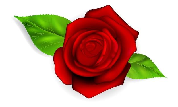 Rose rouge avec deux feuilles vertes