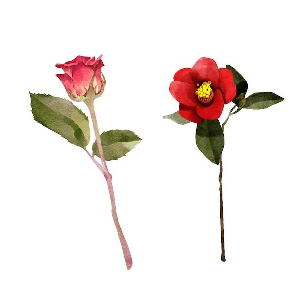Rose Rouge Isolée Vecteur Premium