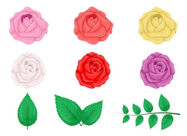 Rose set design illustration isolé sur fond blanc