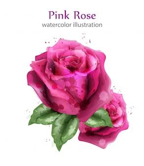 Roses Aquarelles Roses Vecteur Premium