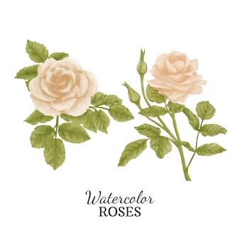 Roses aquarelles