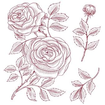 Roses avec feuilles et bourgeons. fleurs botaniques de mariage dans le jardin ou plante de printemps. ornement ou décor. pour carte ou boutique de fleurs.