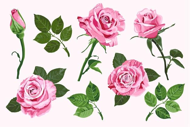 Roses vectorielles roses et éléments de feuilles vertes ensemble isolés sur fond blanc pour la décoration florale