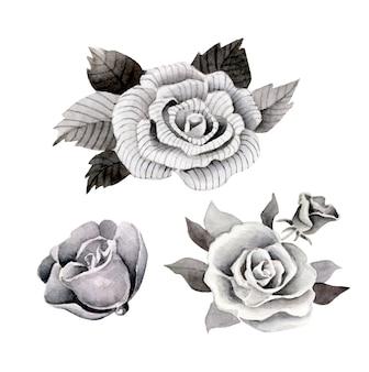 Roses vintage aquarelle
