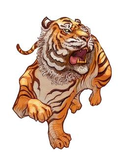 Rugissant, tigre japonais, illustration dessinée à la main