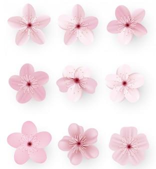 Sakura ou fleur de cerisier