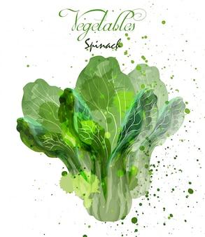 Salade d'épinards laisse aquarelle