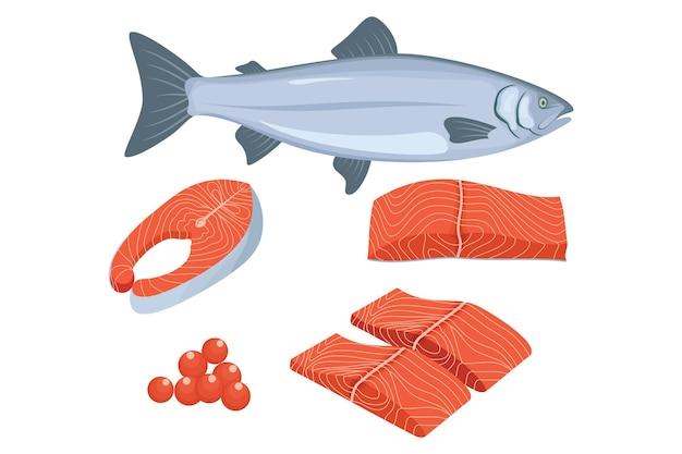 Saumon entier et tranches de saumon. vecteur d'illustration design plat