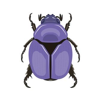 Scarabée. vue de dessus. peut être utilisé comme symboles d'insectes.