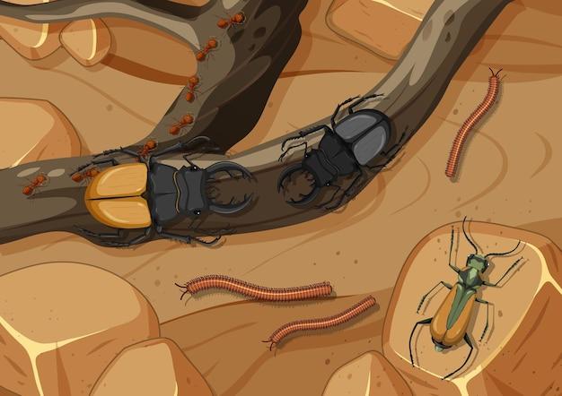 Scène aérienne avec des coléoptères et mille-pattes