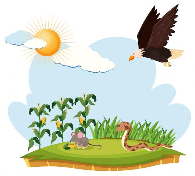 Scène avec aigle, souris et serpent sur une ferme