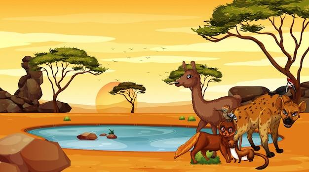 Scène avec beaucoup d'animaux sur le terrain