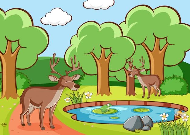 Scène avec des cerfs en forêt