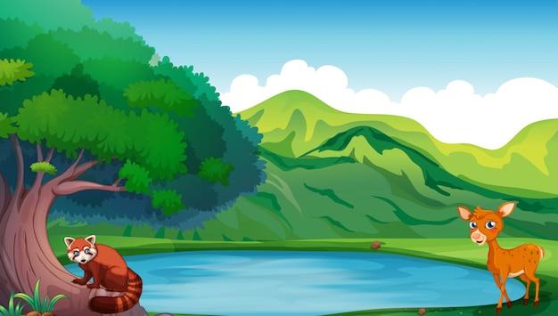 Scène avec des cerfs et des pandas rouges au bord de l'étang