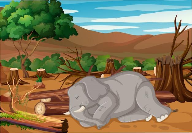 Scène de contrôle de la pollution avec un éléphant mourant dans la forêt