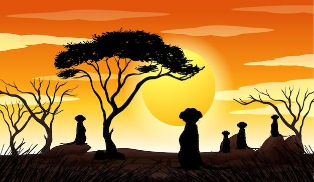 Scène de coucher de soleil silhouette nature en plein air