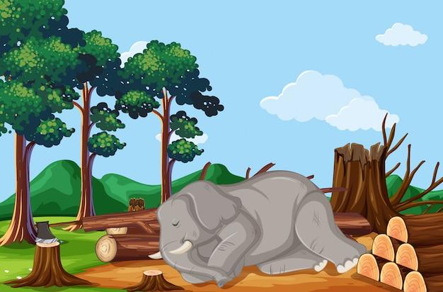 Scène de déforestation avec éléphant en train de mourir