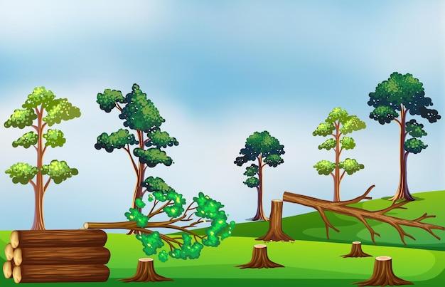 Scène de déforestation sur le terrain
