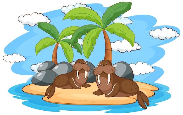 Scène avec deux morses sur l'île