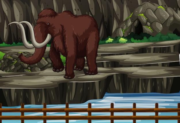 Scène avec éléphant au zoo