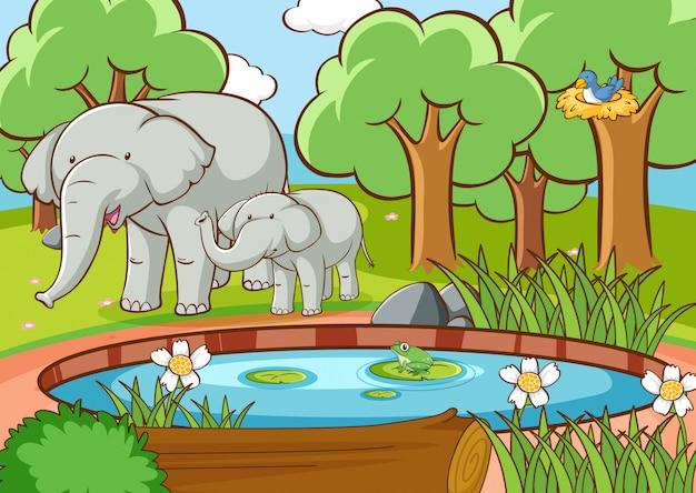 Scène avec des éléphants dans la forêt