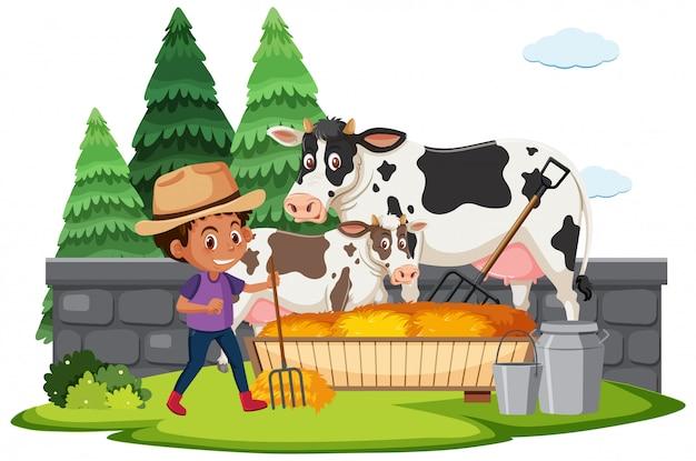 Scène de ferme avec garçon nourrir le foin aux vaches
