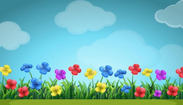 Scène avec des fleurs colorées sur le terrain