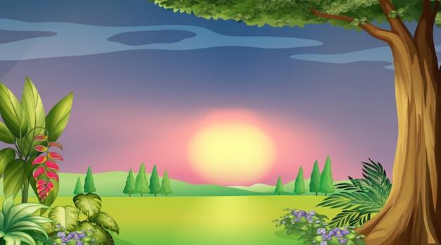 Scène de fond avec coucher de soleil dans le parc
