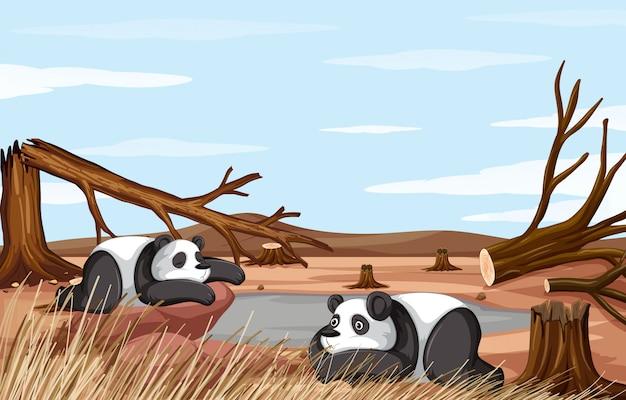 Scène de fond avec deux pandas en train de mourir