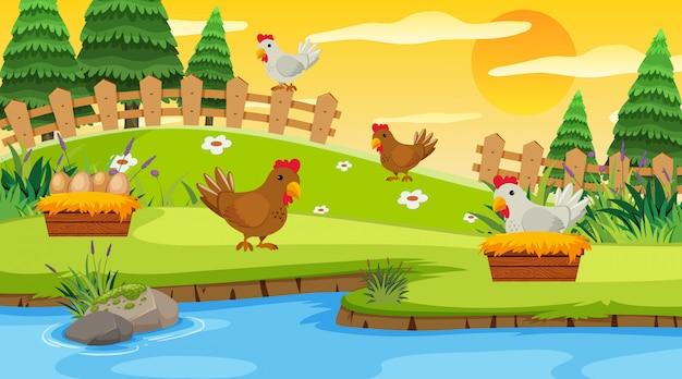 Scène de fond avec des poulets à la ferme