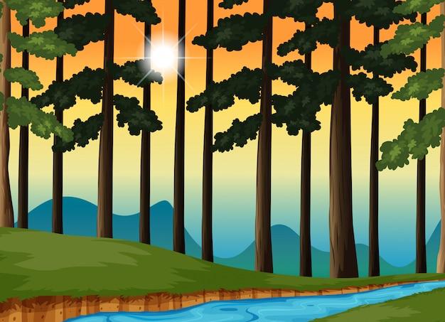Scène de la forêt au coucher du soleil