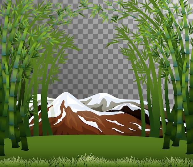 Scène de forêt de bambou avec fond transparent