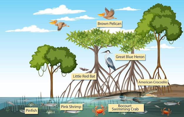 Scène de forêt de mangrove et animaux avec le nom de l'étiquette
