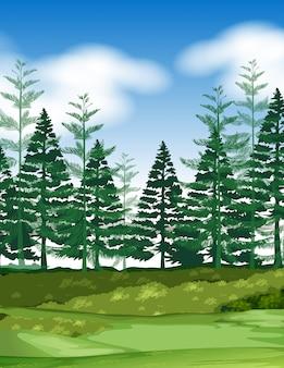 Scène de forêt avec des pins