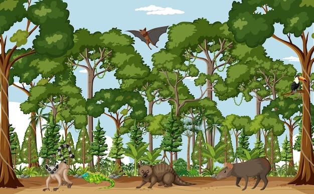 Scène de forêt tropicale humide avec divers animaux sauvages