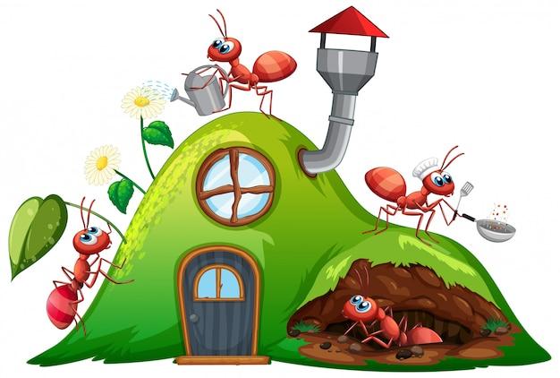 Scène avec des fourmis à la maison de la colline