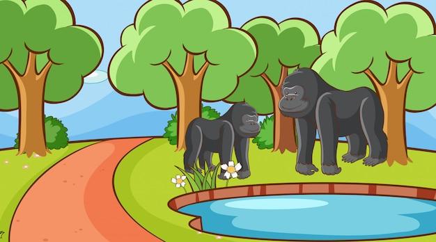 Scène avec gorille en forêt