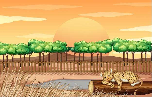 Scène avec guépard au zoo