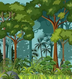 Scène de jungle vierge avec liane et de nombreux arbres