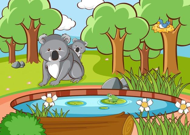 Scène avec koala dans la forêt