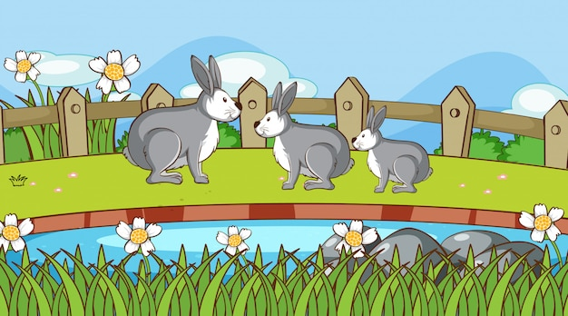 Scène avec des lapins dans le jardin