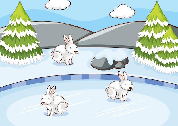 Scène avec des lapins en hiver