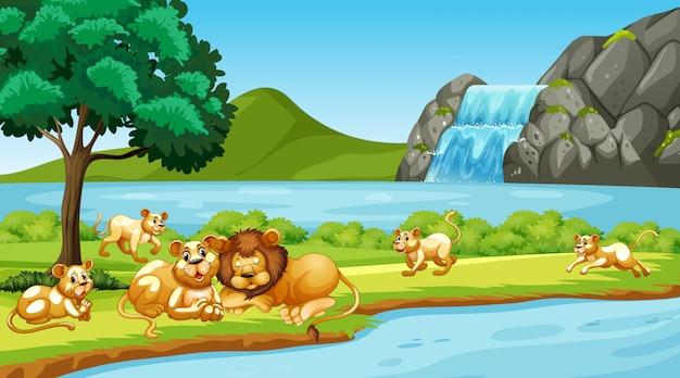 Scène avec des lions dans le parc