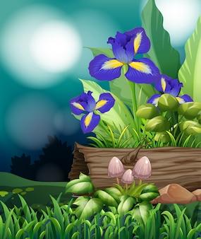 Scène de la nature avec des fleurs d'iris et des champignons