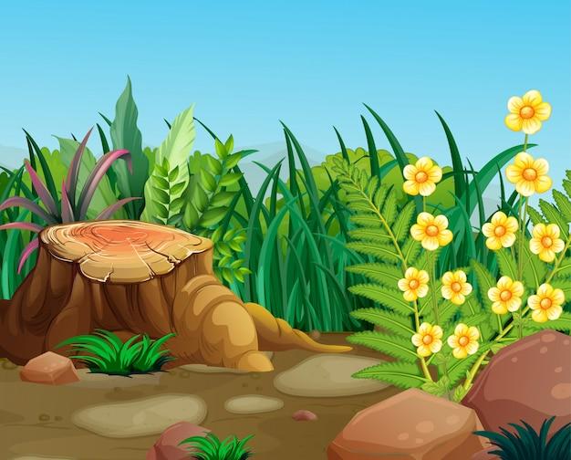 Scène de la nature avec des fleurs jaunes dans le jardin