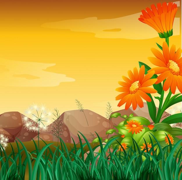 Scène de la nature avec jardin de fleurs au coucher du soleil