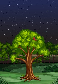 Scène de la nature pendant la nuit