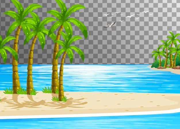 Scène de nature de plage avec transparent