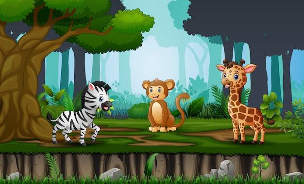 Scène Avec De Nombreux Animaux Dans La Jungle Vecteur Premium